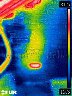 Bees in walls - Thermal photo of honey bee nest behind this attic brick wall