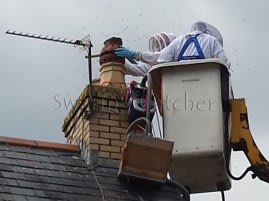 Live honey bee removal specialists
