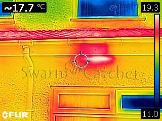Bees in walls - Thermal image of a bee nest in wall - Bristol