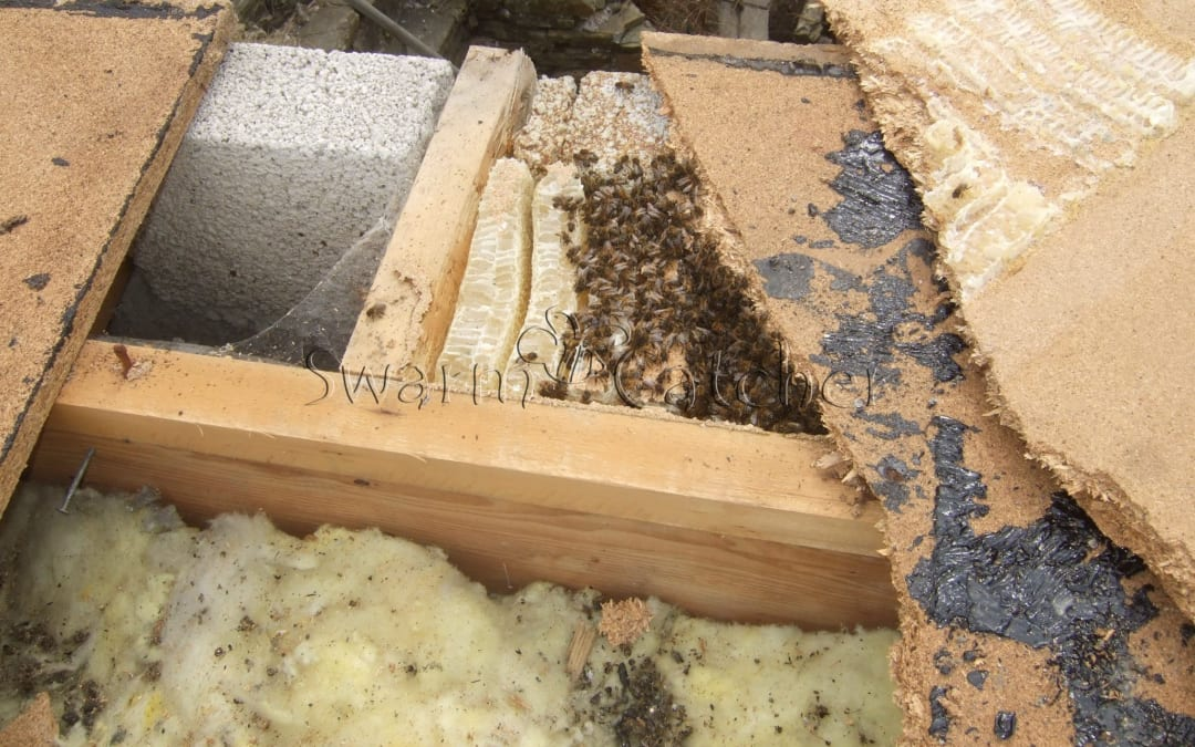 Honey bee cutout – flat roof