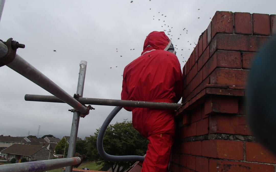 Honey bee removal from chimney – South Wales