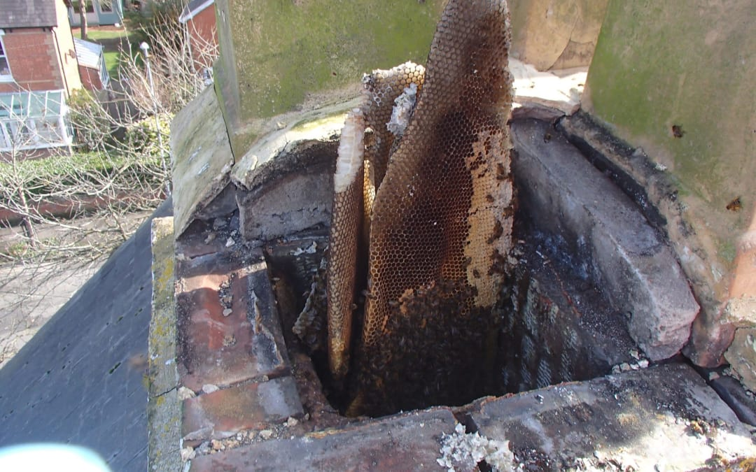 Honey Bee Removal from Chimney near Poole