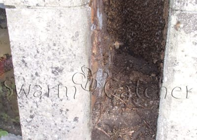 Bees in walls - Honey bee nest in church wall window slot behind perspex removed and rehomed