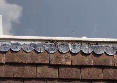 Bees in walls - Honeybee nest in wall beneath window