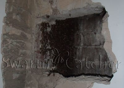 Bees in walls - Opening up a beenest behind an internal blockwall - Rhonda bee removal