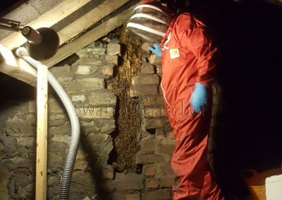 Bees in walls - Removing honey bee nest in attic brick wall