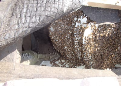 Get rid of honey bees in a roof - Chelmesford