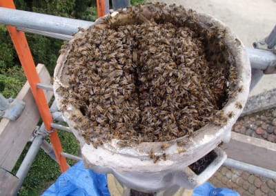 Get rid of honey bees in chimney pot - Wiltshire