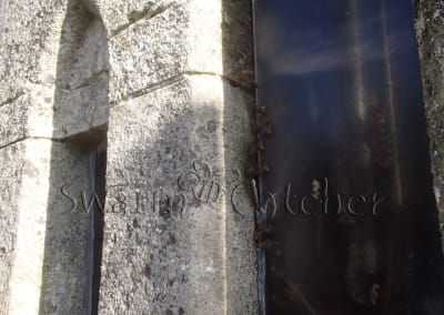 Bees in walls - Honey bee nest in church wall window slot behind perspex