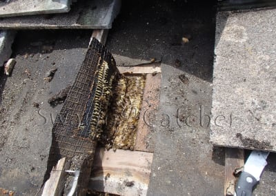 Bees in walls - Honey bee nest behind tiled wall