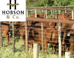 swiftvee livestock auction listing Bedford Auction