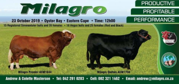 swiftvee livestock auction listing WEBCAST AUCTION Milagro