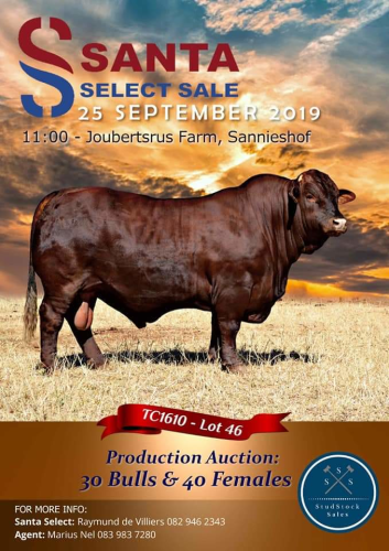 livestock auction listing Santa select auction