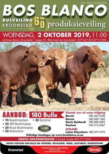 livestock auction listing Bos Blanco Bulveiling