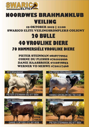livestock auction listing Brahman auction