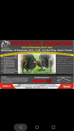 livestock auction listing Hurwitz Bull and Breeding Stock Sale
