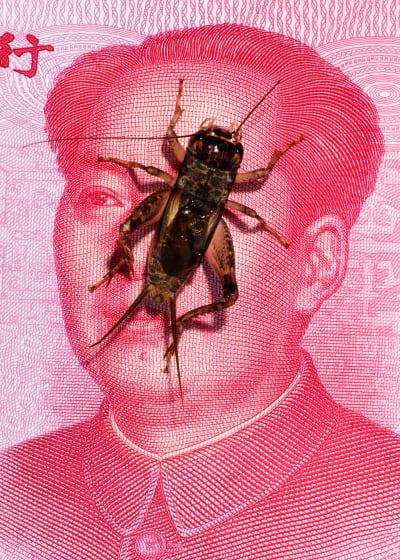 *Crickets* - © © Laurence Kubski, Swiss Design Awards Blog