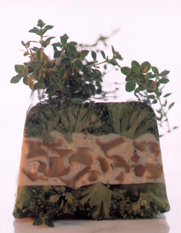 Waldpilz-Terrine mit Broccoli