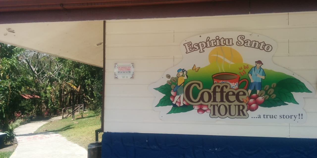 Coffee: From Bean to Cup