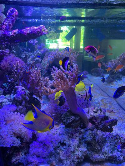 JKFish NJ Custom Aquarium Experts