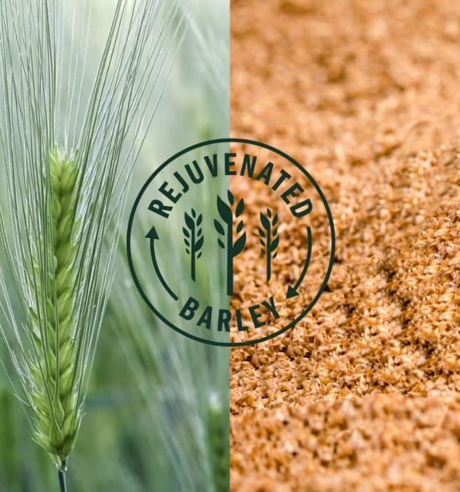 Rejuvenated Barley icon set over images of barley.