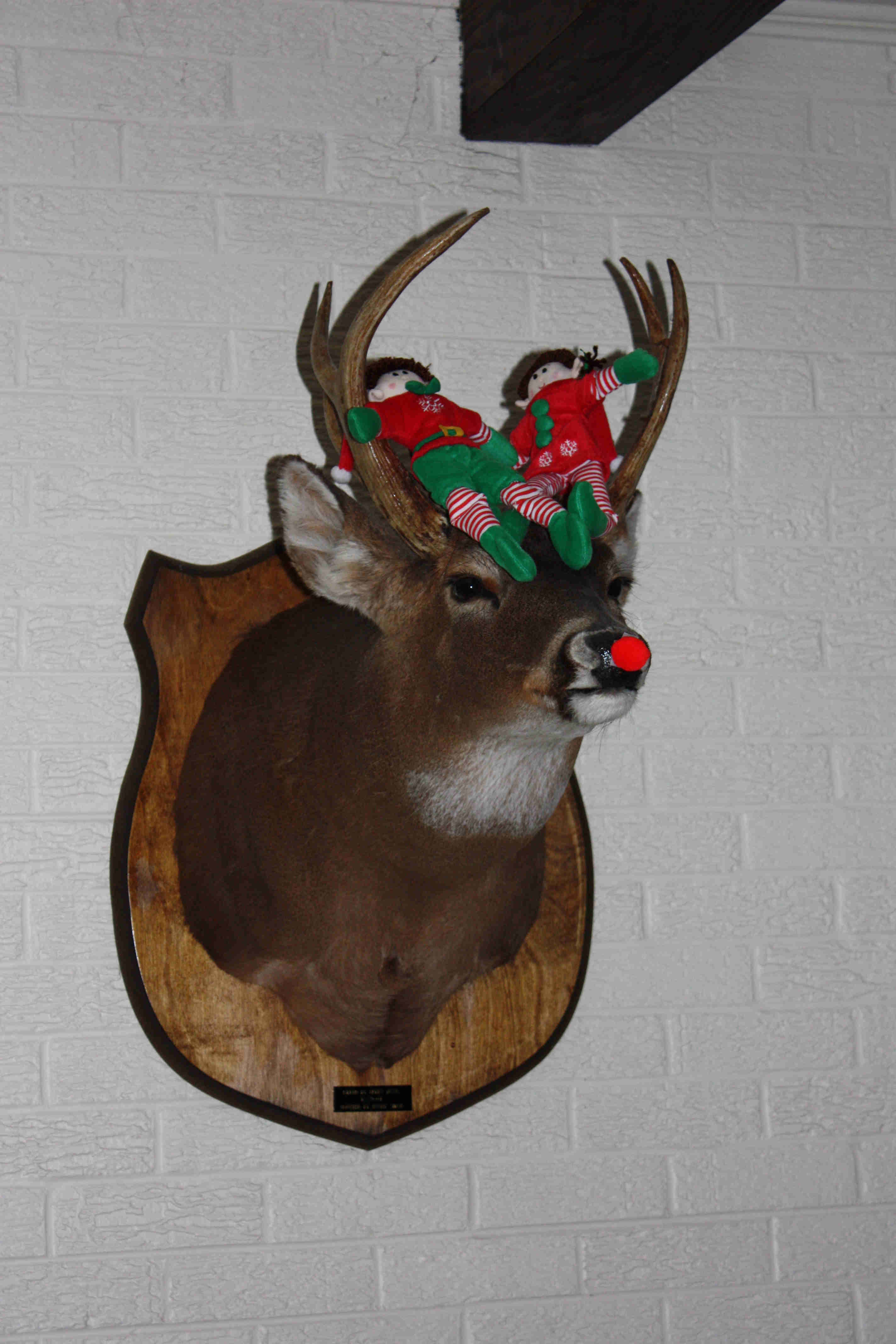 This deer reminded the elves of Rudolph
