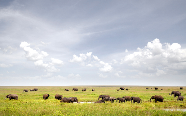 joSon-Africa-Serengeti-and-Beyond_08.jpg