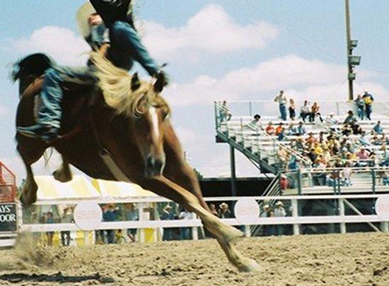 meg-oteri-cowboy.jpg