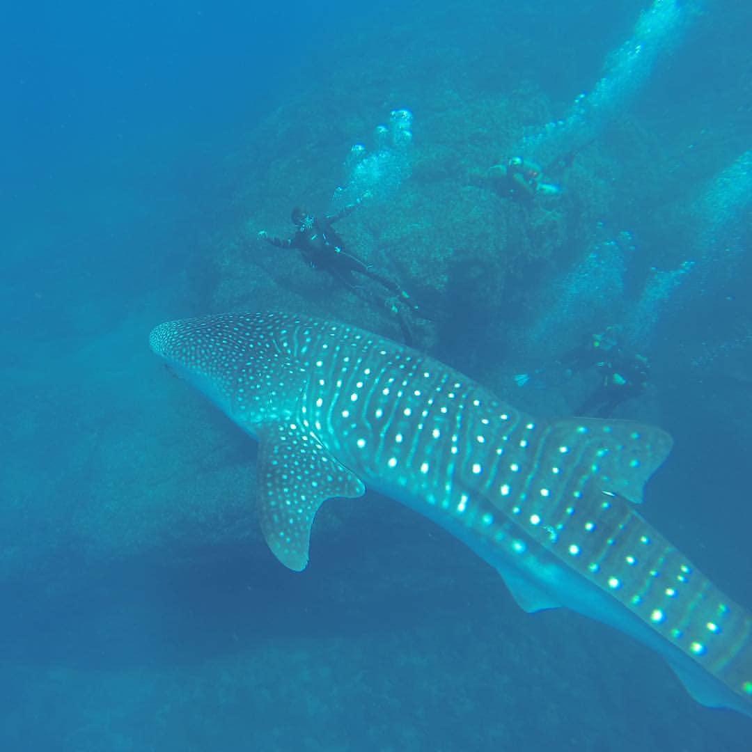 Scuba Diving Tamarindo