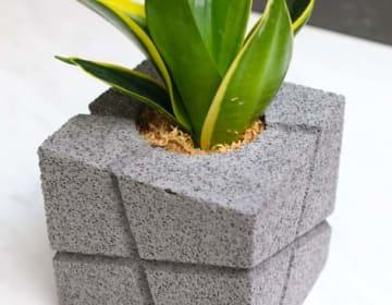 CHOKOTTO(ちょこっと)/クロスラインM/観葉植物