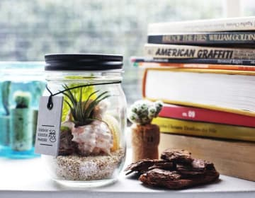 GLASS JAR TERRARIUM KIT01