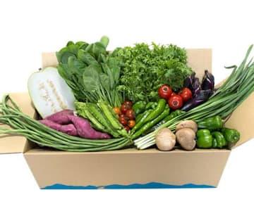 旬の野菜の詰め合わせ