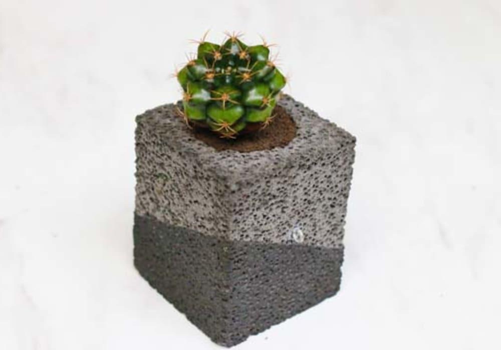 CHOKOTTO(ちょこっと)/ワビサビS/多肉植物