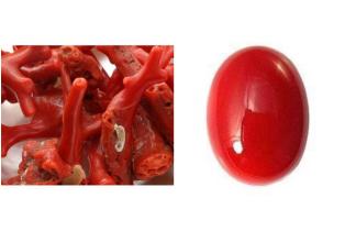 Natural Red Coral Gemstone
