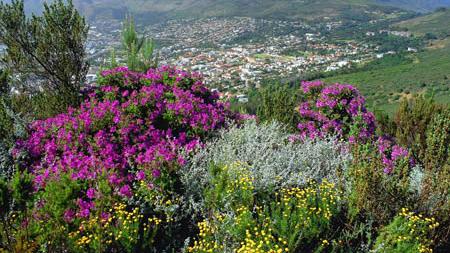 Table mountain   south africa 2418540968 o ho5fyg