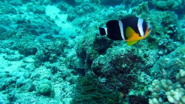 Mauritius aquarium large.desktop 1392 708 efmfnb