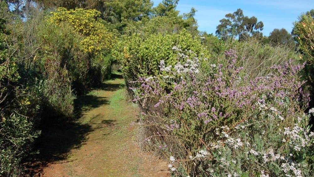 Durbanville nature reserve m00ojv