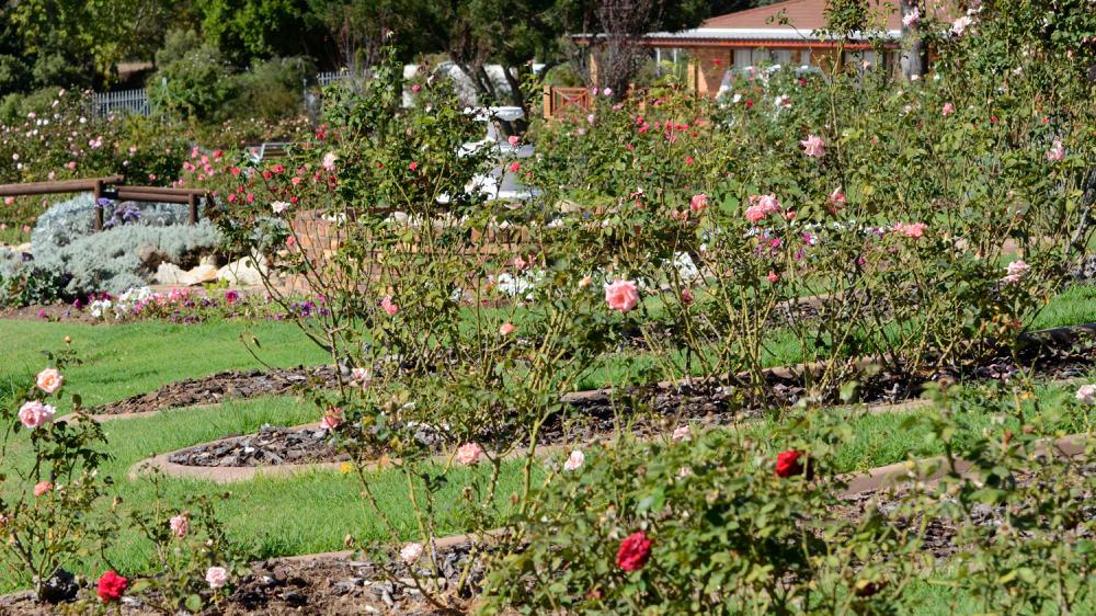 Durbanville rose garden nor4ea