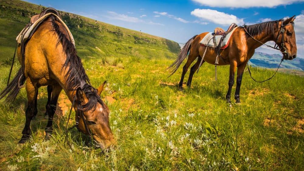 Anoramic view of the drakensberg national park in kwazulu natal fpfak9