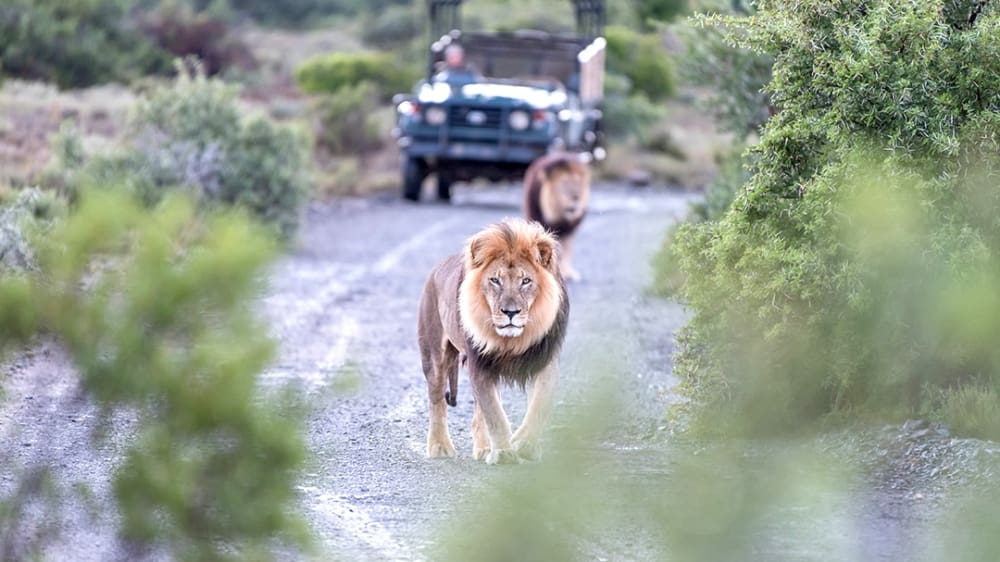 Southafrica img xn7w6u