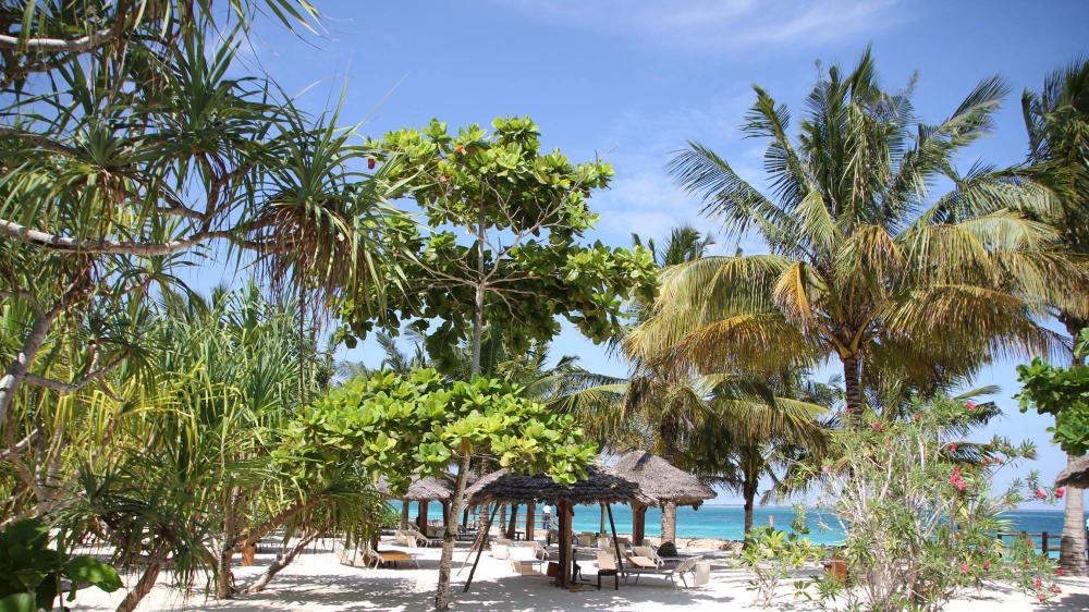 A beach in zanzibar owar1a