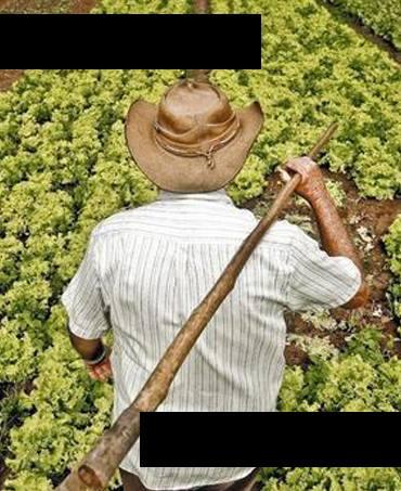 Mevsimlik Organik Ürün