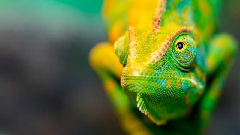 When Exposed to Light, Artificial 'Chameleon Skin' Changes Color