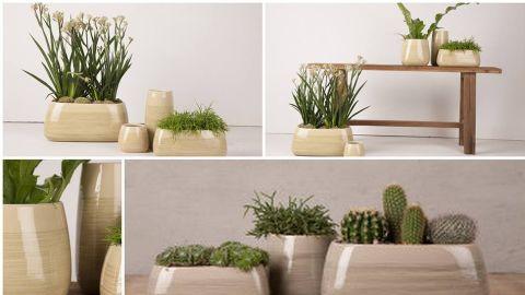 Leafy Life  - Interior designer