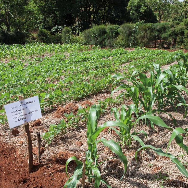 Testing different levels of mulch in Ethiopia. Photo: Louise Thomas/Tearfund