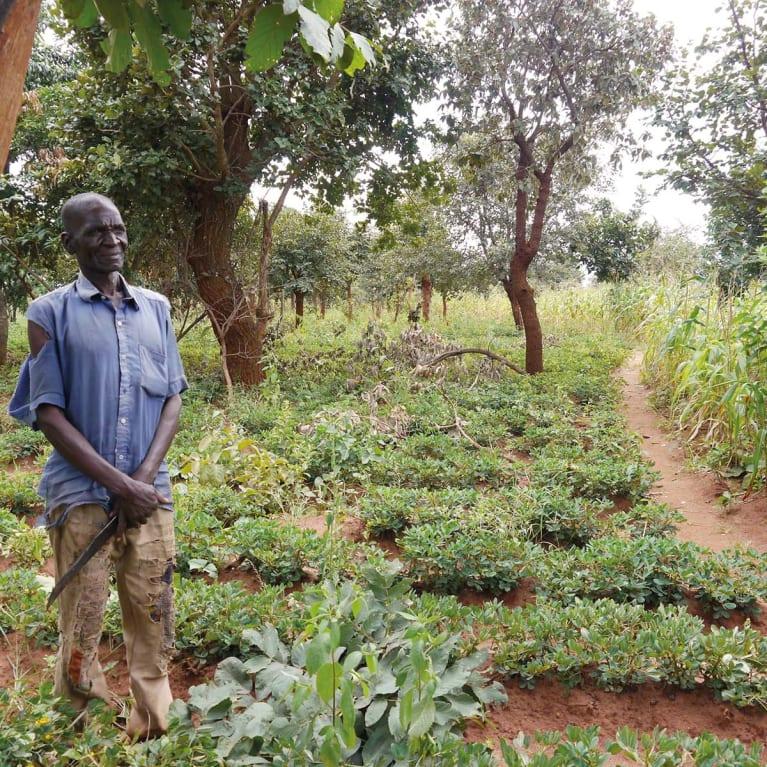 Graças à regeneração natural gerida pelo agricultor, este agricultor do Malawi agora pode cultivar muitas culturas e árvores diferentes, aumentando sua renda e qualidade de vida. Foto: Tony Rinaudo/Visão Mundial Austrália