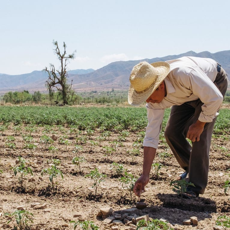 Bolivian farmer irrigating his crops