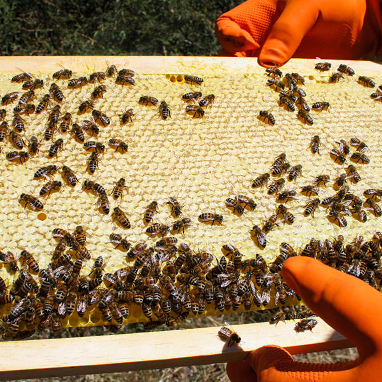 Checking a bee hive in Bolivia.