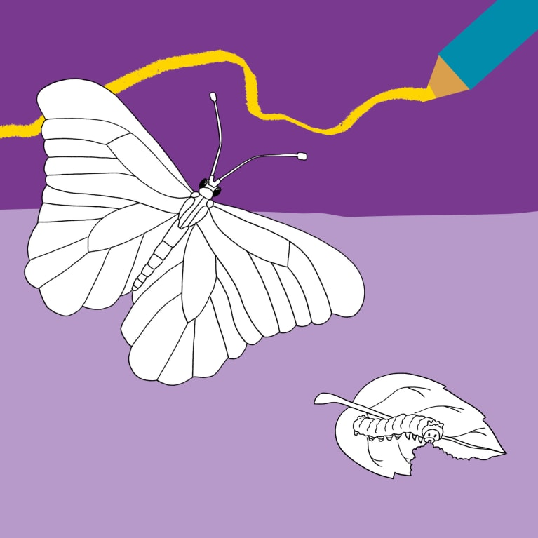 Children's zone banner image showing a butterfly