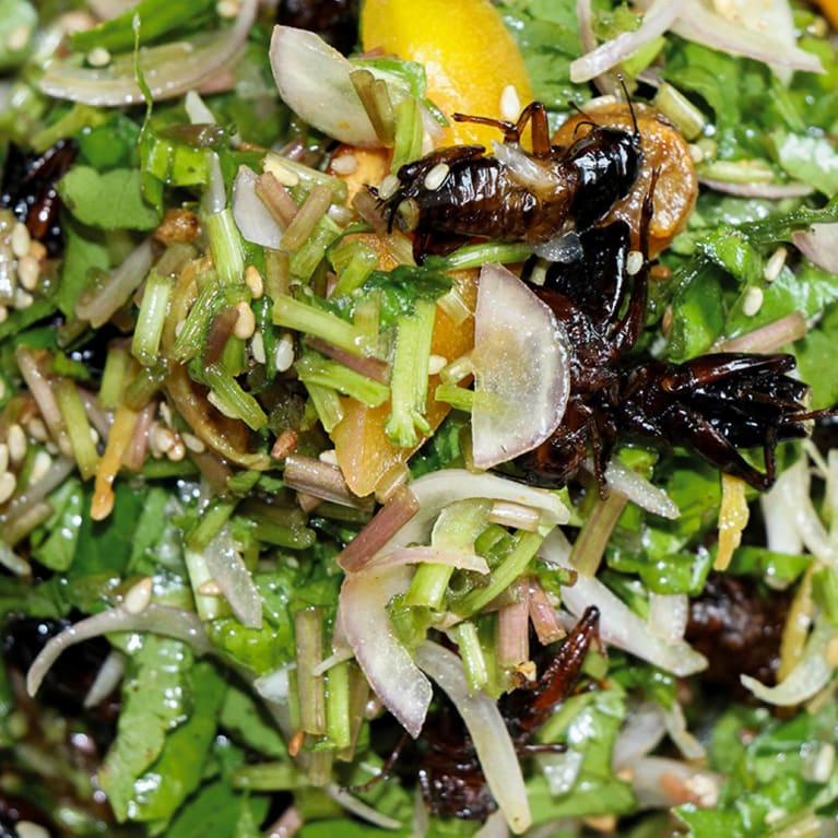 A photo of a cricket and insect salad.